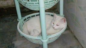 She& x27; s неимоверный кот моих Стоковое Изображение RF