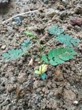 That& x27; s bardzo ładny obrazek w Małym drzewie zdjęcie stock