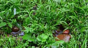 It& x27; s padać Mokra trawa i kamienie krople Obrazy Royalty Free