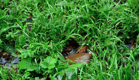 It's raining. Wet grass and stones. Drops. The warm summer rain royalty free stock image