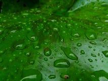 It& x27;s starting to rain Stock Photo