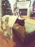 Cold Sleeping Black Cat on Christmas Eve royalty free stock photography