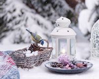 """Winter still life with small bird. {""""total_effects_actions"""":0,""""total_draw_time"""":0,""""layers_used"""":0,""""effects_tried"""":0,&#x22 royalty free stock photography"""