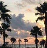 & x22; Tutte che abbia bisogno di sono palme ed un po'del paradiso! & x22; Fotografie Stock Libere da Diritti