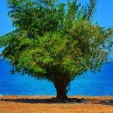 & x22; Um Tree& de bambu x22; imagem de stock