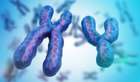 X and Y chromosomes. Genetics concept. 3D rendered illustration.  Stock Images