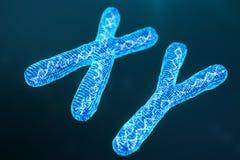 X-Y digitale, kunstmatige chromosomen met DNA die de genetische code dragen Geneticaconcept, kunstmatige intelligentieconcept royalty-vrije stock foto