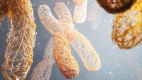 X-Ychromosomen - Nahaufnahme - Wiedergabe 3D lizenzfreie abbildung