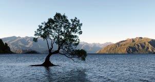 """""""The Tree"""" Lake Wanaka. NZ Stock Photo"""