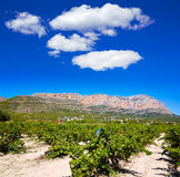 Xabia Javea Montgo vineyards in Alicante Royalty Free Stock Images