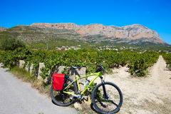 Xabia Javea Montgo vineyards biking MTB Royalty Free Stock Photos