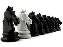 Xadrez do cavaleiro branco entre a xadrez do cavaleiro preto Imagens de Stock Royalty Free