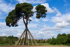 Xandri pine. Collserola, Spain. stock image