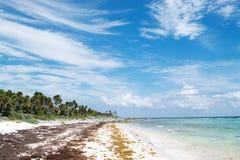 Xcacel strand i Riviera Maya, Mexico royaltyfri foto