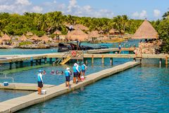 Xcaret park, Mexico. XCARET, MEXICO - NOV 7, 2016: Dolphins attraction of the Xcaret,  Maya civilization archaeological site, Yucatan Peninsula, Quintana Roo Stock Image
