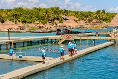 Xcaret park, Mexico. XCARET, MEXICO - NOV 7, 2016: Dolphins attraction of the Xcaret,  Maya civilization archaeological site, Yucatan Peninsula, Quintana Roo Royalty Free Stock Photo