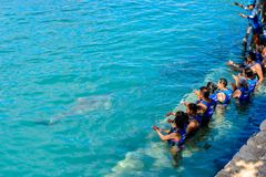 Xcaret park, Mexico. XCARET, MEXICO - NOV 7, 2016: Dolphins attraction of the Xcaret,  Maya civilization archaeological site, Yucatan Peninsula, Quintana Roo Stock Photo