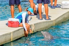 Xcaret park, Mexico. XCARET, MEXICO - NOV 7, 2016: Unidentified girl feeds a dolphin in the Xcaret,  Maya civilization archaeological site, Yucatan Peninsula Royalty Free Stock Photos