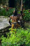 Mayan people in Mexico. XCARET, MEXICO - NOV 8, 2015: Unidentified man wears the leopard body paint of a Maya indian. The Mayan are a group of Indigenous people Royalty Free Stock Photos