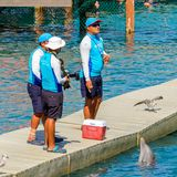 Xcaret park, Mexico. XCARET, MEXICO - NOV 7, 2016: Unidentified paople work for the Dolphins attraction of the Xcaret,  Maya civilization archaeological site Stock Photos