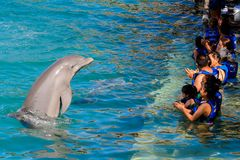 Xcaret park, Mexico. XCARET, MEXICO - NOV 7, 2016: Unidentified tourists play with a dolphin in the Xcaret,  Maya civilization archaeological site, Yucatan Royalty Free Stock Image
