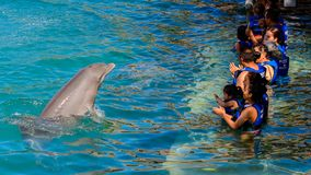Xcaret park, Mexico. XCARET, MEXICO - NOV 7, 2016: Unidentified tourists play with a dolphin in the Xcaret,  Maya civilization archaeological site, Yucatan Stock Photography