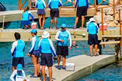 Xcaret park, Mexico. XCARET, MEXICO- NOV 7, 2016: Unidentified paople work for the Dolphins attraction of the Xcaret,  Maya civilization archaeological site Royalty Free Stock Photo