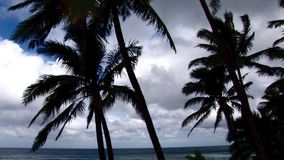 Xcorps TV Surfing North Shore Hawaii Palms and Beach stock video