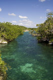 Xel-Ha Rivier _mg_9545 Royalty-vrije Stock Foto's