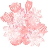 Xenia Coral de pompage Photos stock