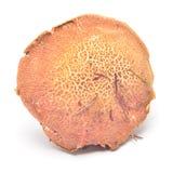 Xerocomus cisalpinus Stock Image