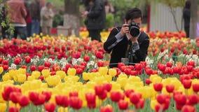 XI 'ett Kina April 15 2012: Mannen tar ett foto för tulpan i parkerar stock video
