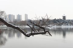 Xi 'an xingqing park, snow Royalty Free Stock Image