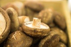 Xianggu蘑菇 免版税库存图片