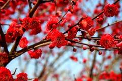 Free Xiangxuehai Plum Garden,Suzhou,Jiangsu ,China Stock Photos - 50320273
