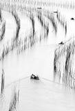 xiapu för områdesporslinfujian hav Royaltyfria Bilder