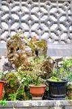 Xidi Village Hospital bonsai Royalty Free Stock Photo