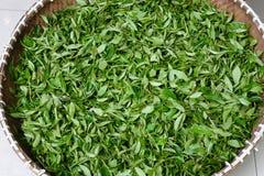 Xihu Longjing te eller Dragon Well Tea Royaltyfri Fotografi