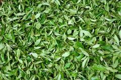 Xihu Longjing Tea,or Dragon Well Tea Royalty Free Stock Image