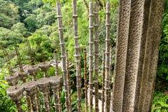 Xilitla - κήπος του Edward James στοκ εικόνες