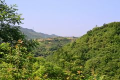 Xinchang, Zhejiang-Provinz, grüne Baumlandschaft, CHINA lizenzfreies stockfoto