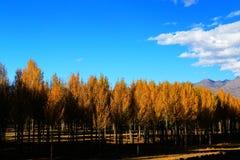 Xinduqiao, ein photographer& x27; s-Paradies Lizenzfreies Stockfoto