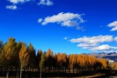 Xinduqiao, ein photographer& x27; s-Paradies Stockfotografie