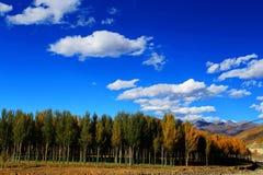 Xinduqiao, ein photographer& x27; s-Paradies Lizenzfreie Stockfotografie