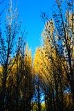 Xinduqiao, ein photographer& x27; s-Paradies Stockbild