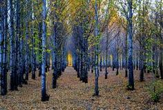 Xinduqiao, ein photographer& x27; s-Paradies Stockfoto