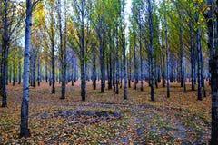 Xinduqiao, ein photographer& x27; s-Paradies Lizenzfreies Stockbild