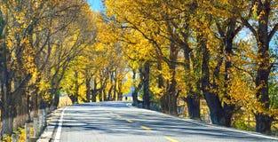 Xinduqiao S215 Autumn highway Royalty Free Stock Photography