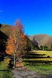 Xinduqiao, un paraíso del ` s del fotógrafo Fotos de archivo