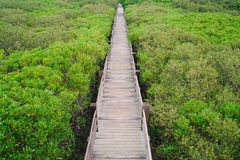 Xinfeng-Mangroven-Spur in Hsinchu, Taiwan lizenzfreie stockfotos